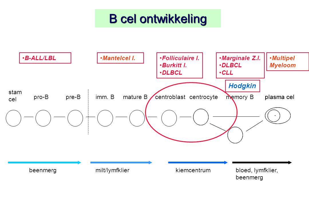 B cel ontwikkeling stam cel plasma celpro-Bpre-Bimm. Bcentroblastcentrocyteplasma celmemory Bmature B beenmergmilt/lymfklierkiemcentrumbloed, lymfklie