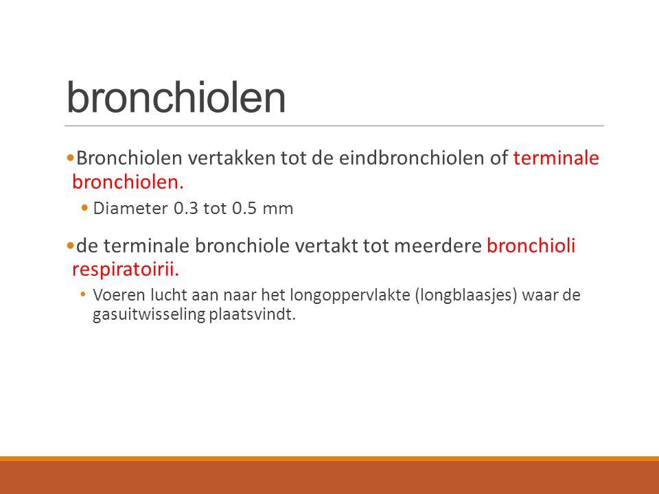 bronchiolen Bronchiolen vertakken tot de eindbronchiolen of terminale bronchiolen. Diameter 0.3 tot 0.5 mm de terminale bronchiole vertakt tot meerder