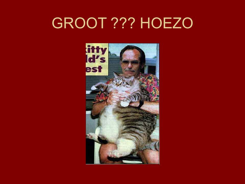 GROOT ??? HOEZO