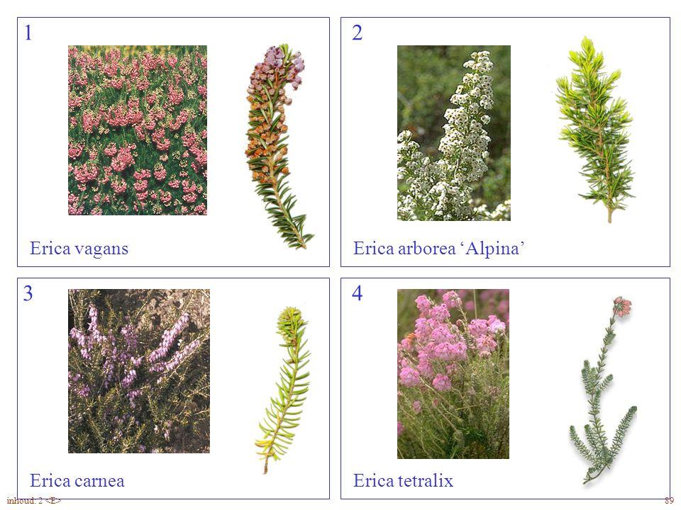 12 34 Erica vagansErica arborea 'Alpina' Erica carneaErica tetralix Erica overzicht 89inhoud: 2