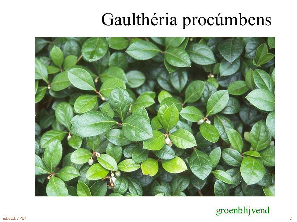Gaulthéria procúmbens groenblijvend 2inhoud: 2