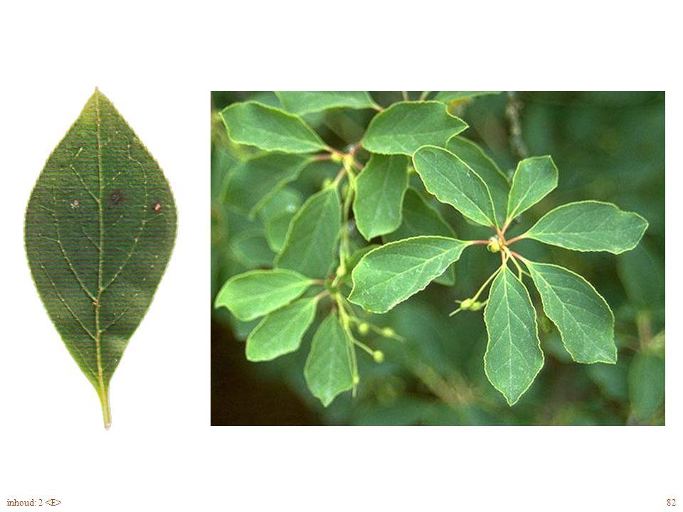 Rhododendron Will. blad 93inhoud: 2