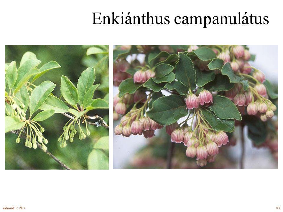 Eríca cárnea Voorjaarsheide bloemknoppen in de herfst (éénzijdig gericht) buisbloemen (kelk zeer klein, alle Erica soorten) groenblijvend 85inhoud: 2