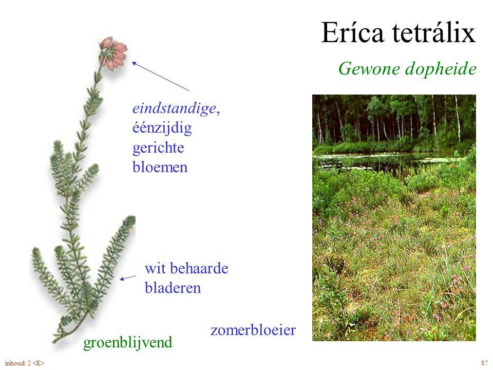 Vaccínium vítis-idaéa Rode bosbes, Vossebes groenblijvend 63inhoud: 2