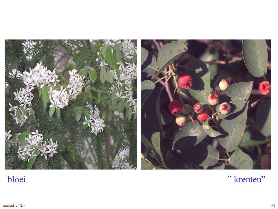 """bloei """" krenten"""" Amelanchier lamarckii bloei, vrucht 98inhoud: 2"""