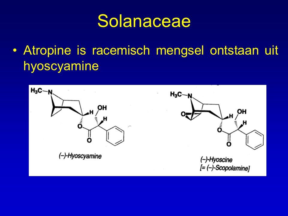 Farmacologische activiteit Farmacologische activiteit (en gebruik) van: –de plant –de alkaloiden Activiteit van de alkaloiden –Atropine Atropine en hyoscyamine hebben dezelfde werking: parasympatholytisch.