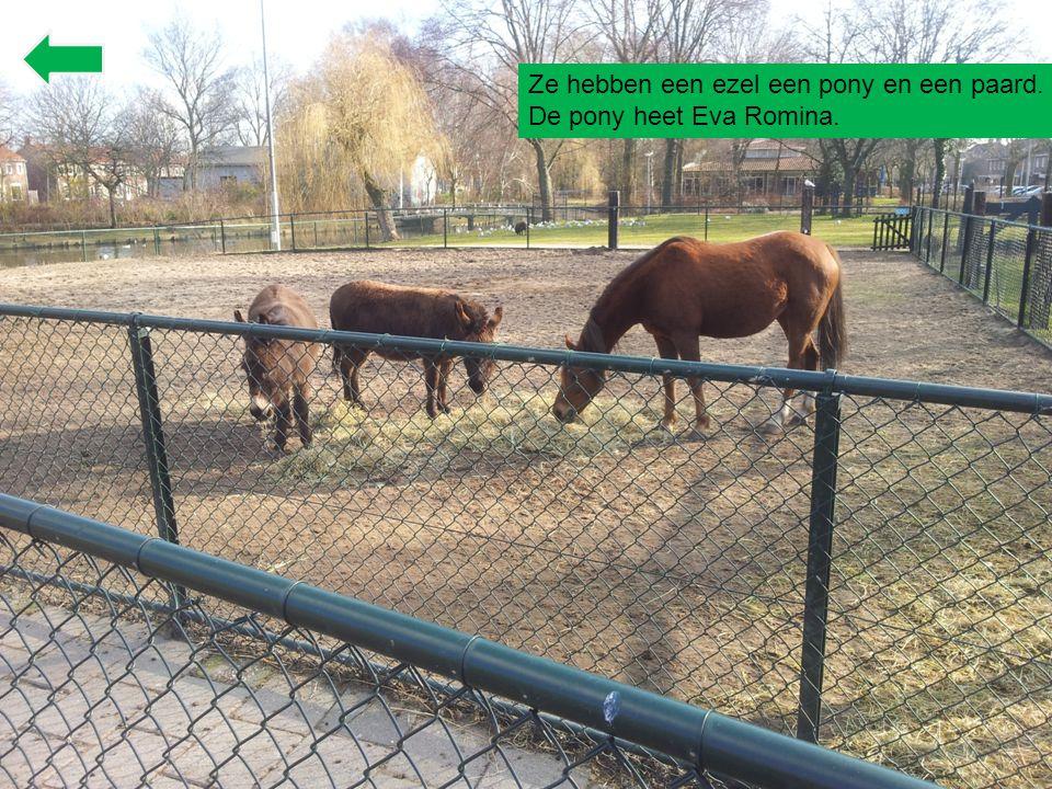 Ze hebben een ezel een pony en een paard. De pony heet Eva Romina.