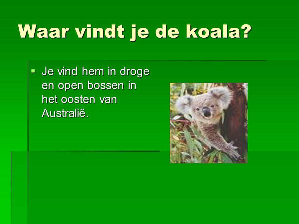Waar vindt je de koala?  Je vind hem in droge en open bossen in het oosten van Australië.