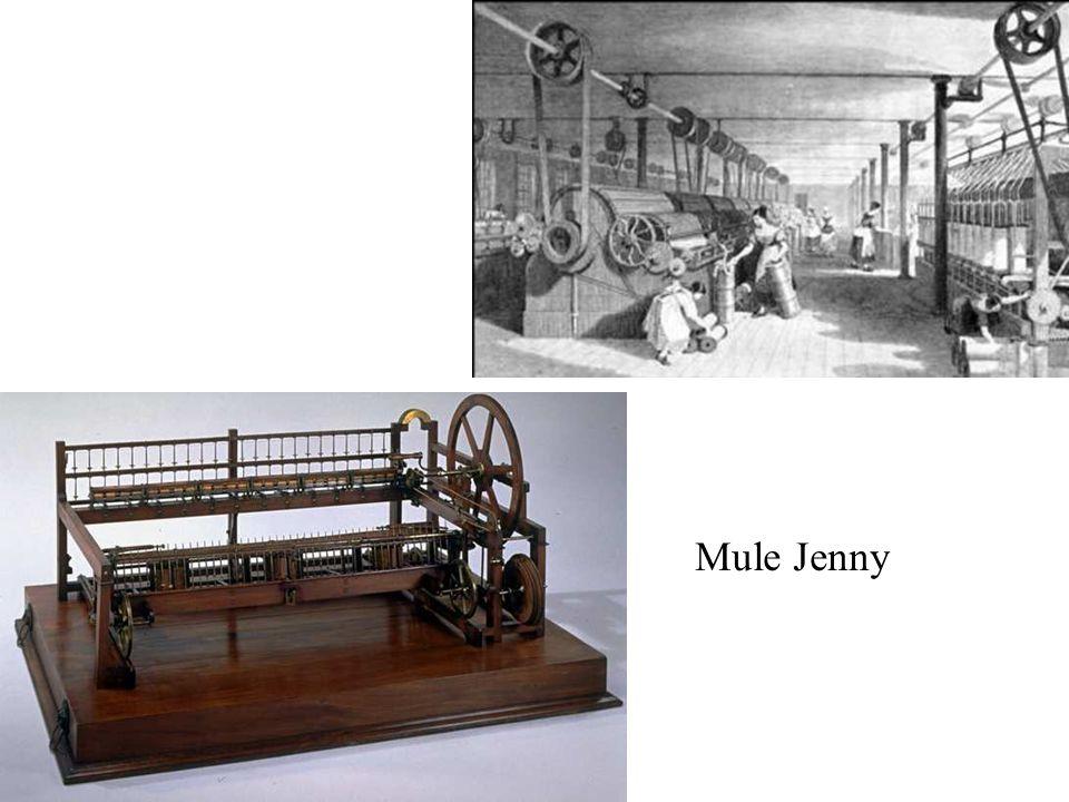 Mule Jenny