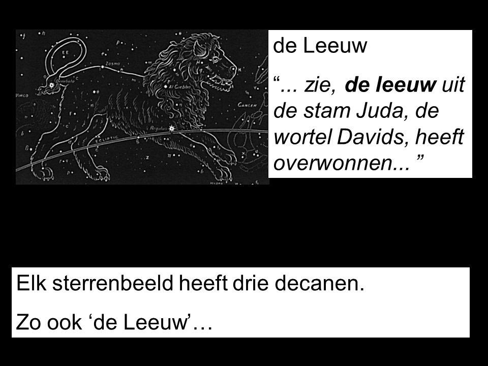 """de Leeuw """"... zie, de leeuw uit de stam Juda, de wortel Davids, heeft overwonnen... """" Elk sterrenbeeld heeft drie decanen. Zo ook 'de Leeuw'…"""