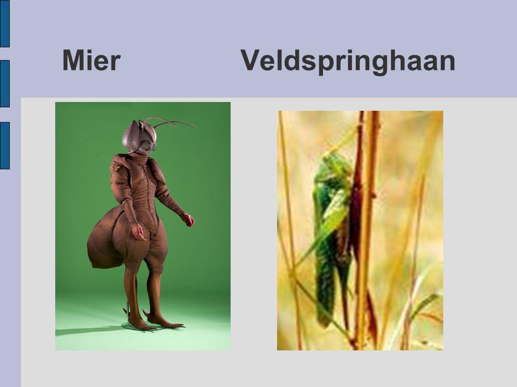 Mier Veldspringhaan