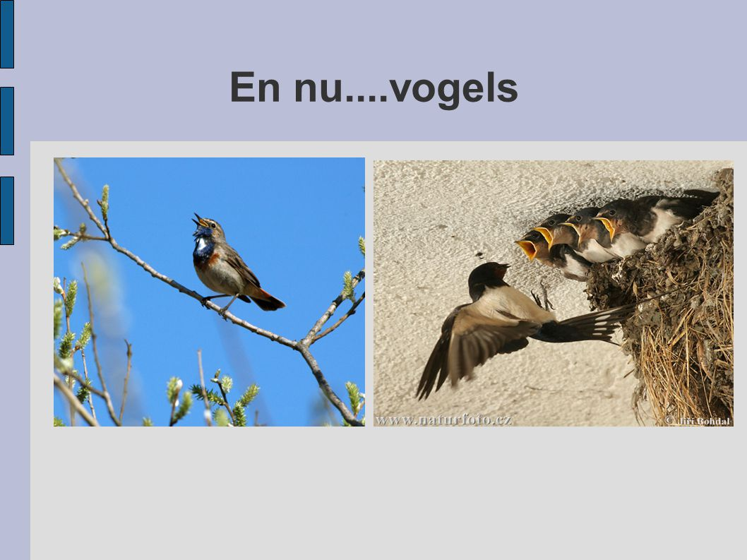 En nu....vogels