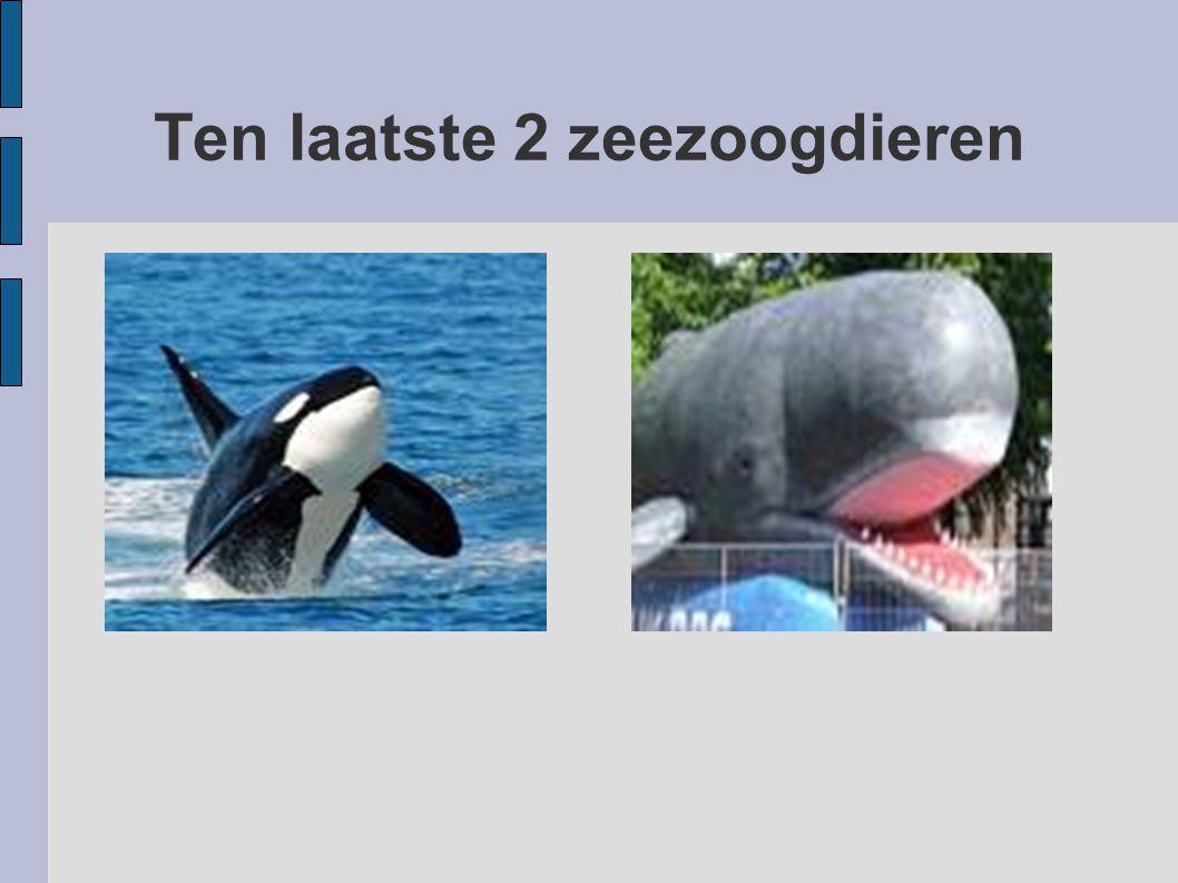 Ten laatste 2 zeezoogdieren