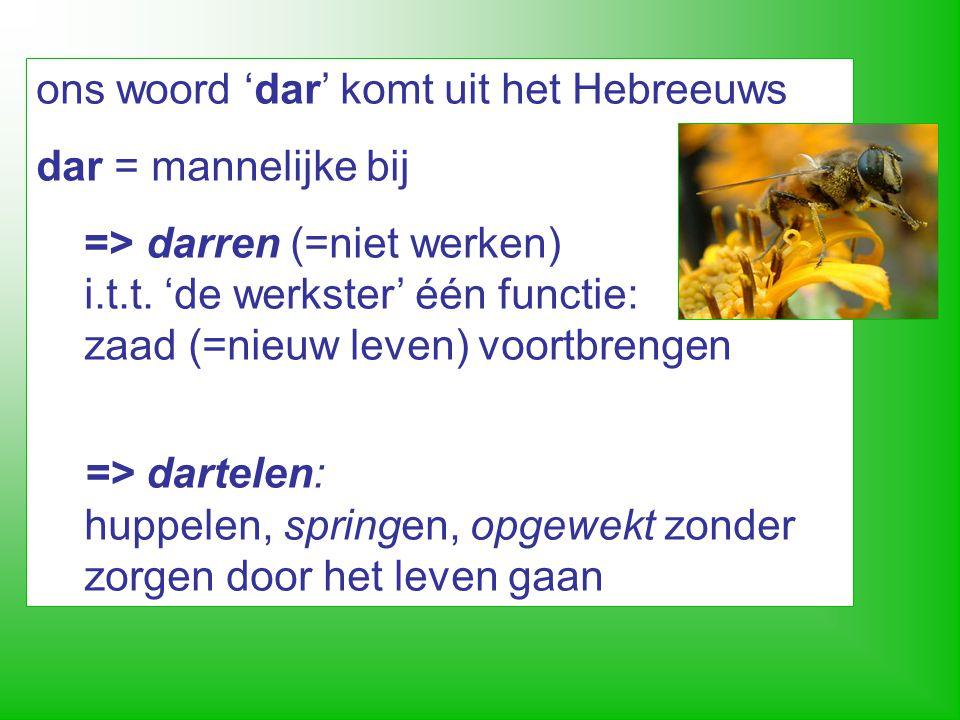 de dar… * maagdelijke geboorte (partheno-genese) * na de bruidsvlucht worden de darren bij de ingang van de kast door het bijenvolk afgemaakt (darrenslacht)