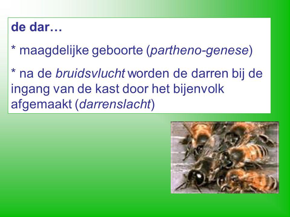 bij produceert honing > een beeld van de Schrift 10 Kostelijker zijn zij dan goud (…) en zoeter dan honig, ja dan honigzeem uit de raat.