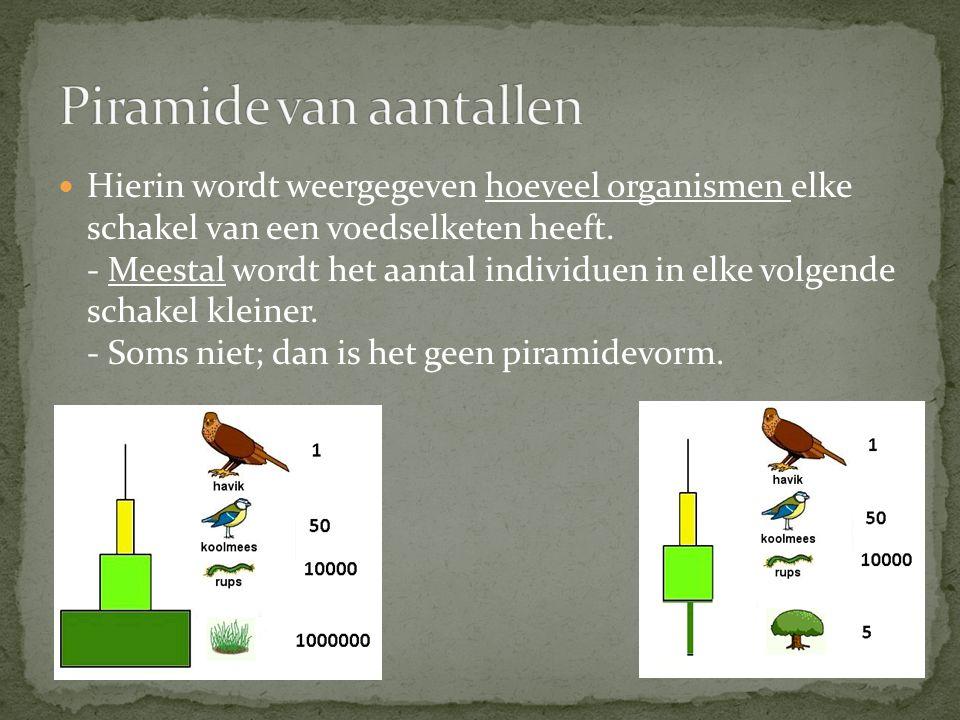 Hierin wordt weergegeven hoeveel organismen elke schakel van een voedselketen heeft. - Meestal wordt het aantal individuen in elke volgende schakel kl