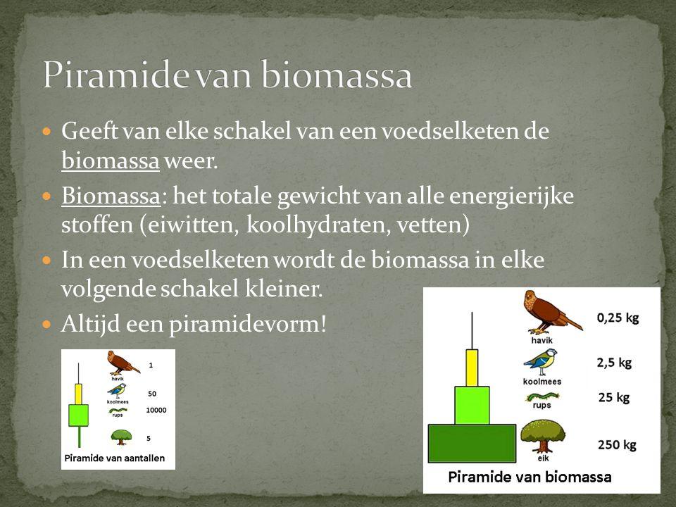 Geeft van elke schakel van een voedselketen de biomassa weer. Biomassa: het totale gewicht van alle energierijke stoffen (eiwitten, koolhydraten, vett