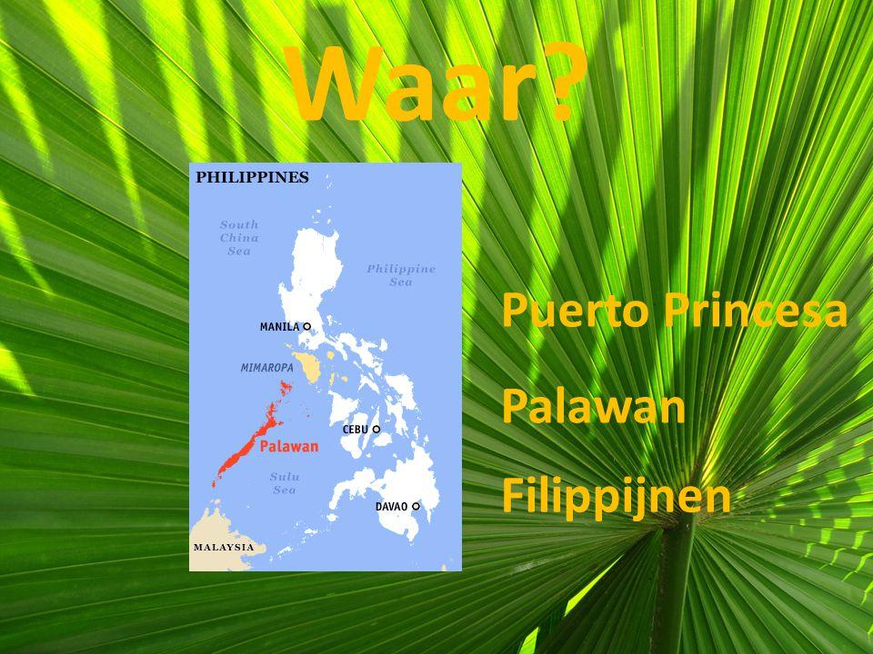 Waar? Puerto Princesa Palawan Filippijnen