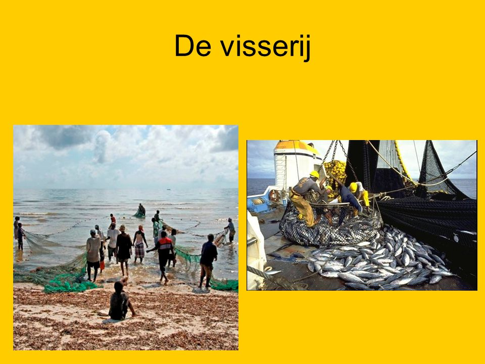 De visserij