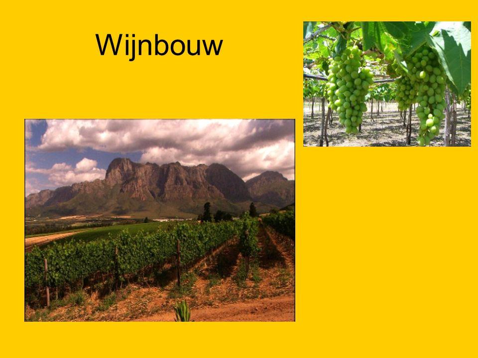 Wijnbouw