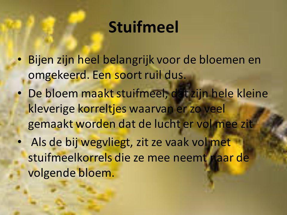 Stuifmeel Bijen zijn heel belangrijk voor de bloemen en omgekeerd. Een soort ruil dus. De bloem maakt stuifmeel, dat zijn hele kleine kleverige korrel