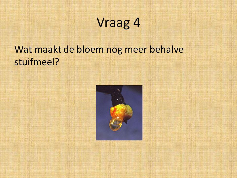 Vraag 4 Wat maakt de bloem nog meer behalve stuifmeel?
