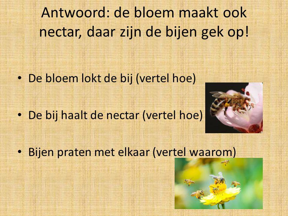 Antwoord: de bloem maakt ook nectar, daar zijn de bijen gek op! De bloem lokt de bij (vertel hoe) De bij haalt de nectar (vertel hoe) Bijen praten met