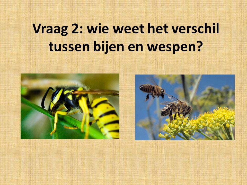 Vraag 2: wie weet het verschil tussen bijen en wespen?