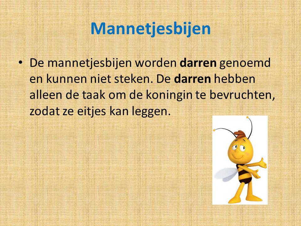 Mannetjesbijen De mannetjesbijen worden darren genoemd en kunnen niet steken. De darren hebben alleen de taak om de koningin te bevruchten, zodat ze e