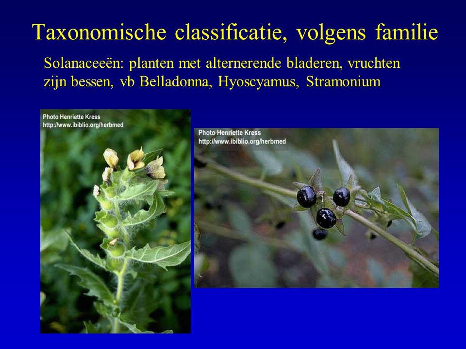 Taxonomische classificatie, volgens familie Solanaceeën: planten met alternerende bladeren, vruchten zijn bessen, vb Belladonna, Hyoscyamus, Stramoniu
