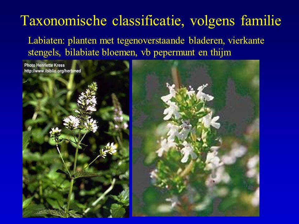 Taxonomische classificatie, volgens familie Labiaten: planten met tegenoverstaande bladeren, vierkante stengels, bilabiate bloemen, vb pepermunt en th