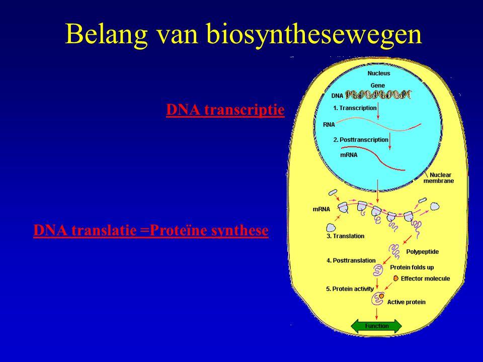 Belang van biosynthesewegen DNA translatie =Proteïne synthese DNA transcriptie