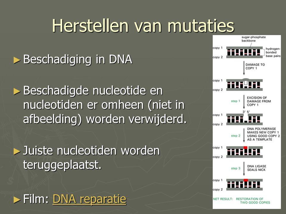 Herstellen van mutaties ► Beschadiging in DNA ► Beschadigde nucleotide en nucleotiden er omheen (niet in afbeelding) worden verwijderd. ► Juiste nucle