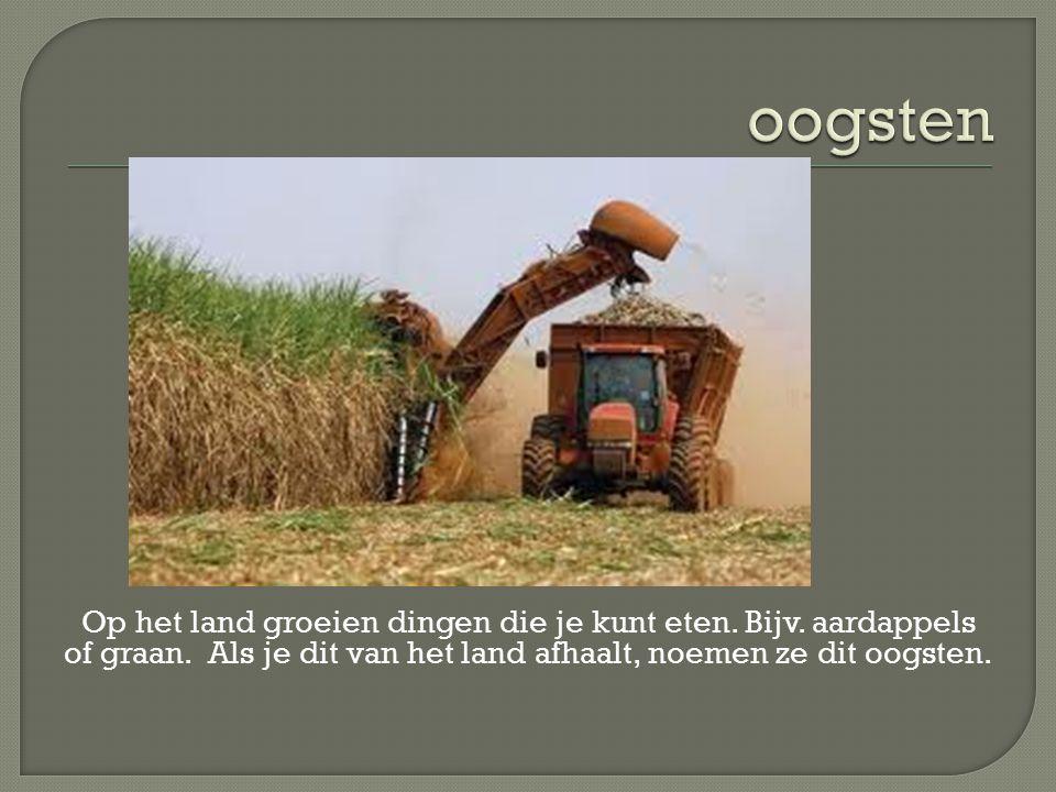 Op het land groeien dingen die je kunt eten. Bijv. aardappels of graan. Als je dit van het land afhaalt, noemen ze dit oogsten.