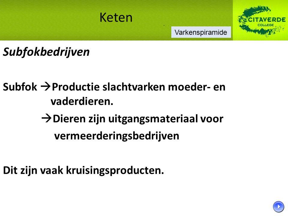 Subfokbedrijven Subfok  Productie slachtvarken moeder- en vaderdieren.  Dieren zijn uitgangsmateriaal voor vermeerderingsbedrijven Dit zijn vaak kru