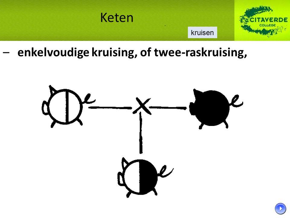 – enkelvoudige kruising, of twee-raskruising, Keten kruisen