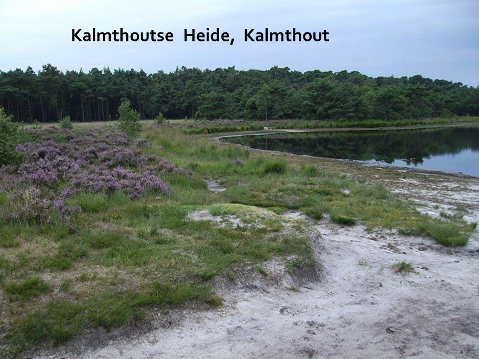Het Toreke, Hulsthout