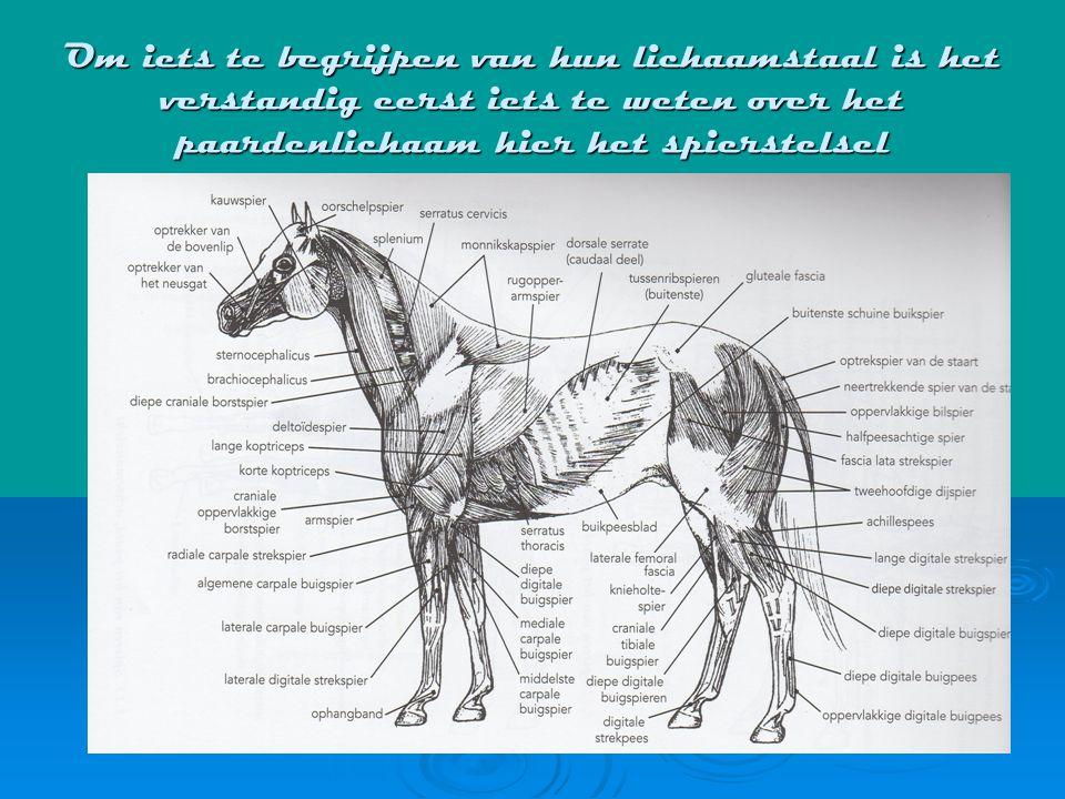 Om iets te begrijpen van hun lichaamstaal is het verstandig eerst iets te weten over het paardenlichaam hier het spierstelsel