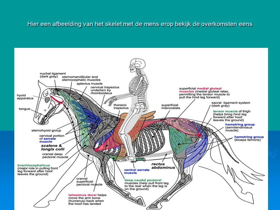 Hier een afbeelding van het skelet met de mens erop bekijk de overkomsten eens