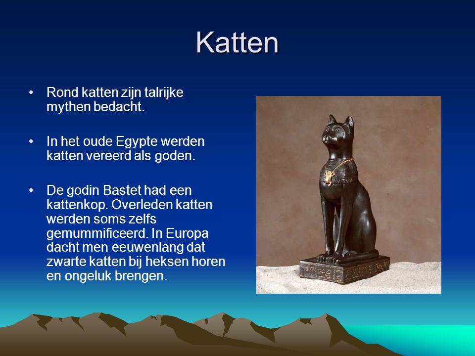 Katten Rond katten zijn talrijke mythen bedacht. In het oude Egypte werden katten vereerd als goden. De godin Bastet had een kattenkop. Overleden katt