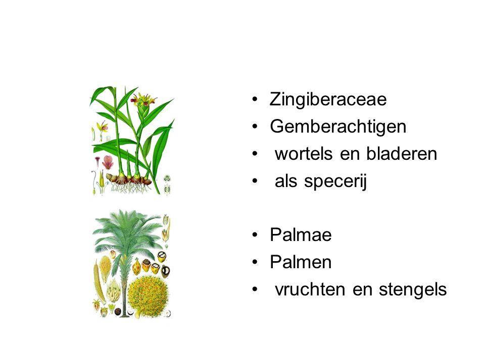 Zingiberaceae Gemberachtigen wortels en bladeren als specerij Palmae Palmen vruchten en stengels