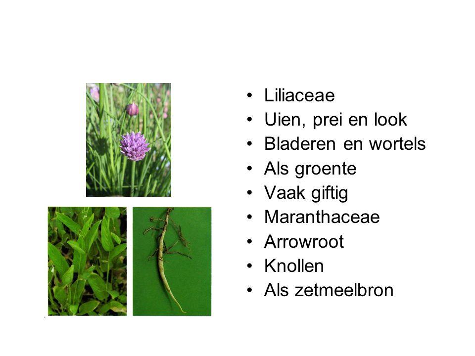 Liliaceae Uien, prei en look Bladeren en wortels Als groente Vaak giftig Maranthaceae Arrowroot Knollen Als zetmeelbron