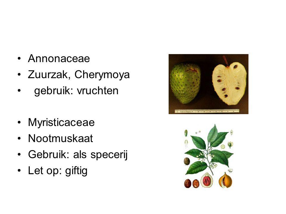 Annonaceae Zuurzak, Cherymoya gebruik: vruchten Myristicaceae Nootmuskaat Gebruik: als specerij Let op: giftig
