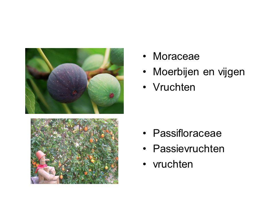 Curcubitaceae Komkommers, meloenen, Courgettes Vruchten Cruciferaceae Kolen en 'kersen Groenten