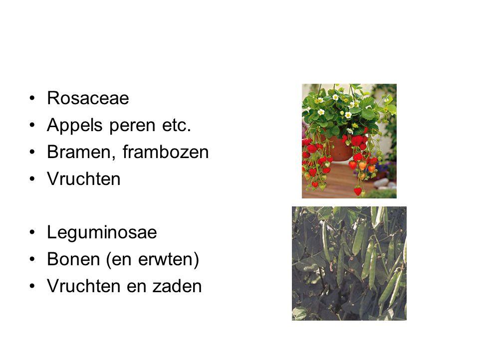 Rosaceae Appels peren etc. Bramen, frambozen Vruchten Leguminosae Bonen (en erwten) Vruchten en zaden