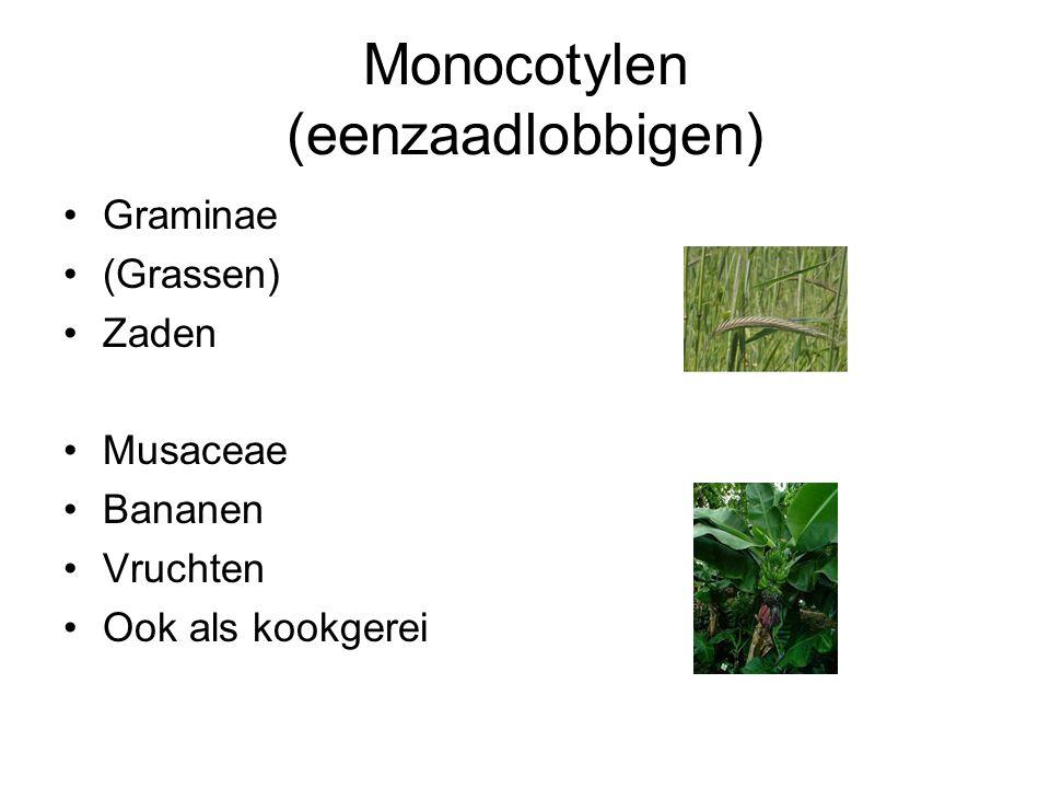 Monocotylen (eenzaadlobbigen) Graminae (Grassen) Zaden Musaceae Bananen Vruchten Ook als kookgerei
