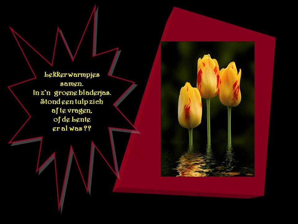 Lieve lente schenk u zegen. Vriendelijk voorjaar kom !! Strooi uw bloemen Allerwegen. Breng ons gras en kruid weerom.