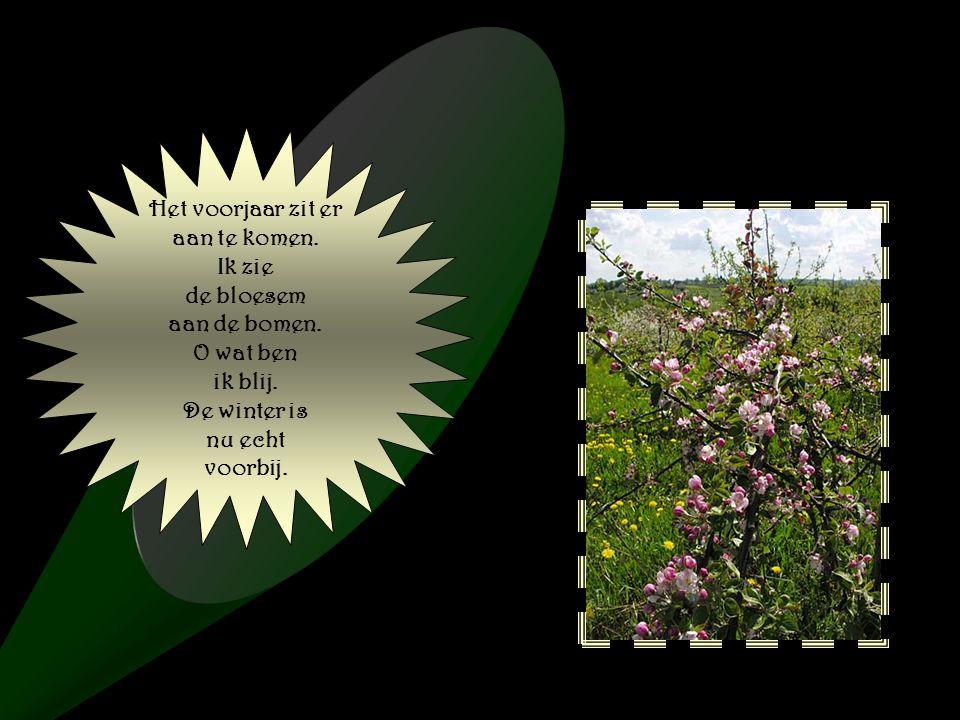 Met mooie lente bloemen, En een zonnetje erbij.Daar kan men van genieten.