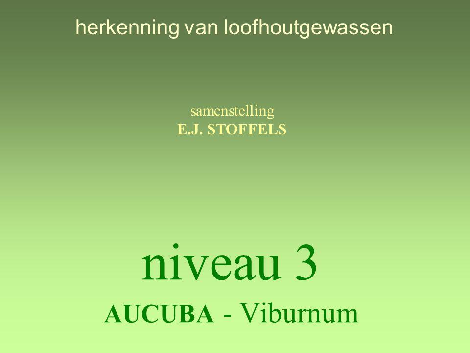 niveau 3 AUCUBA - Viburnum samenstelling E.J. STOFFELS herkenning van loofhoutgewassen