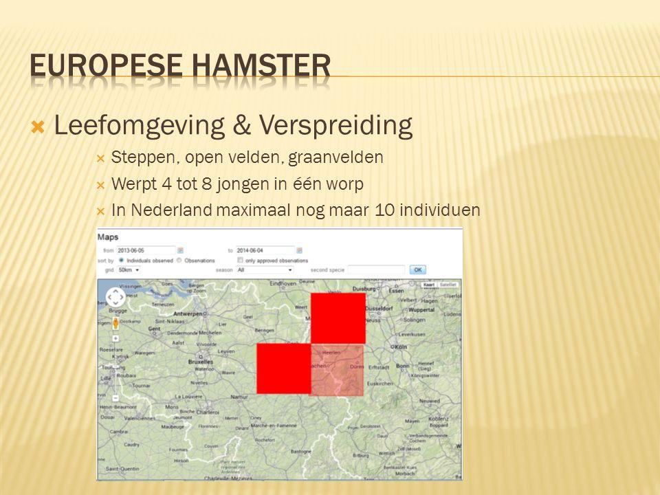  Leefomgeving & Verspreiding  Steppen, open velden, graanvelden  Werpt 4 tot 8 jongen in één worp  In Nederland maximaal nog maar 10 individuen